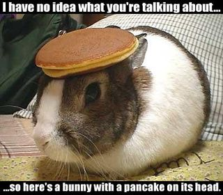 Bunny With A Pancake On It's HEad